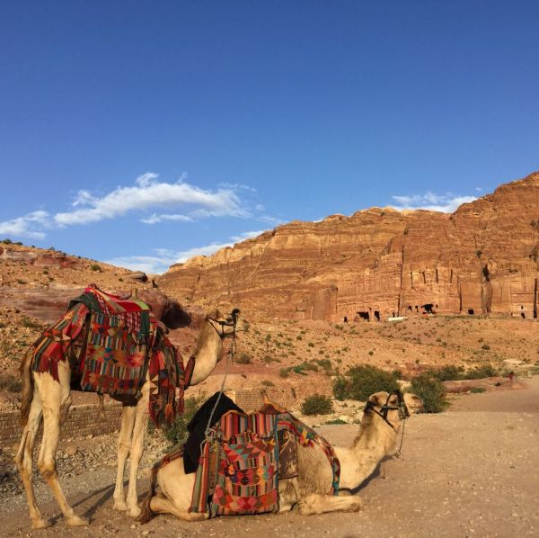 mistreatment animals Petra