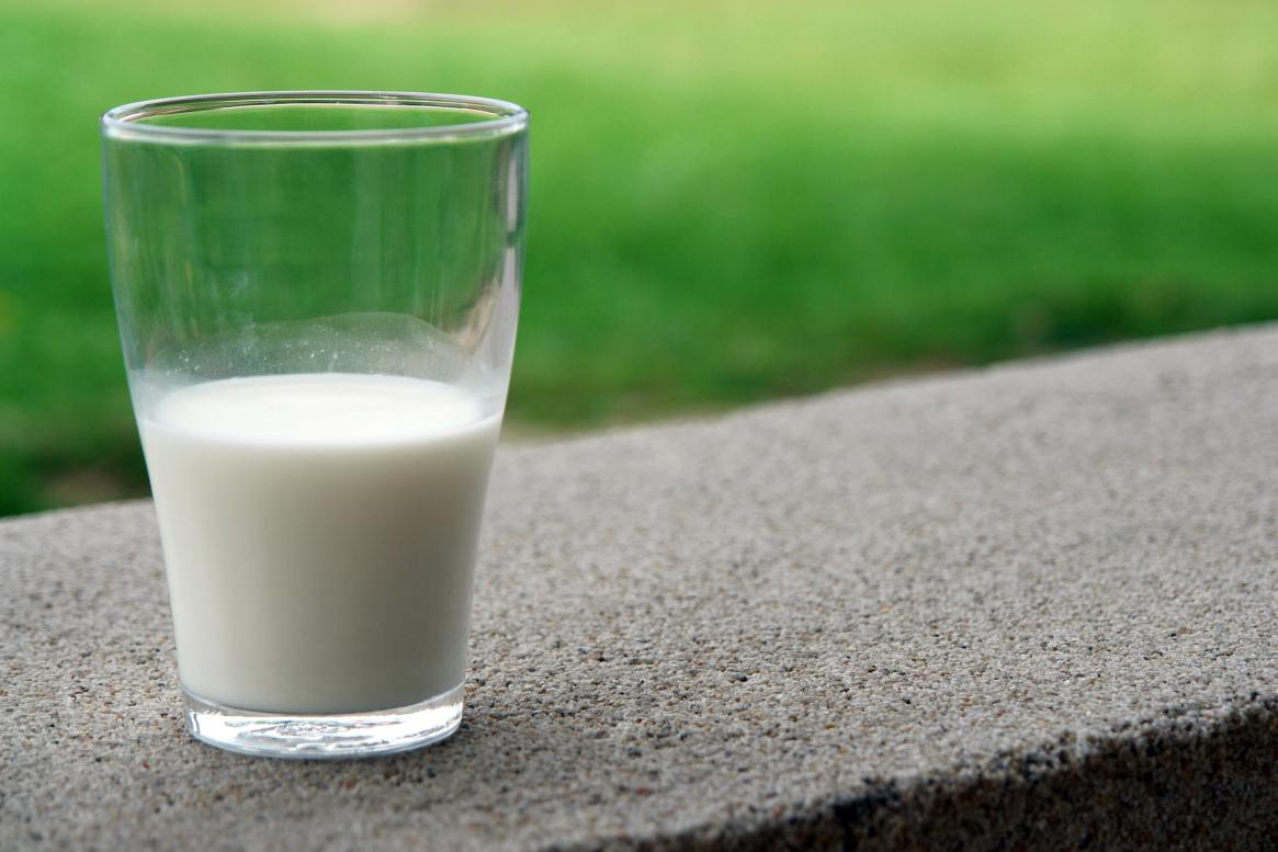 milk and casein