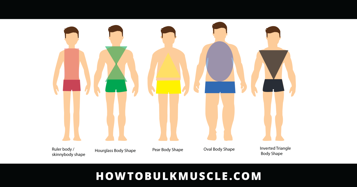 body shapes and bodybuilding