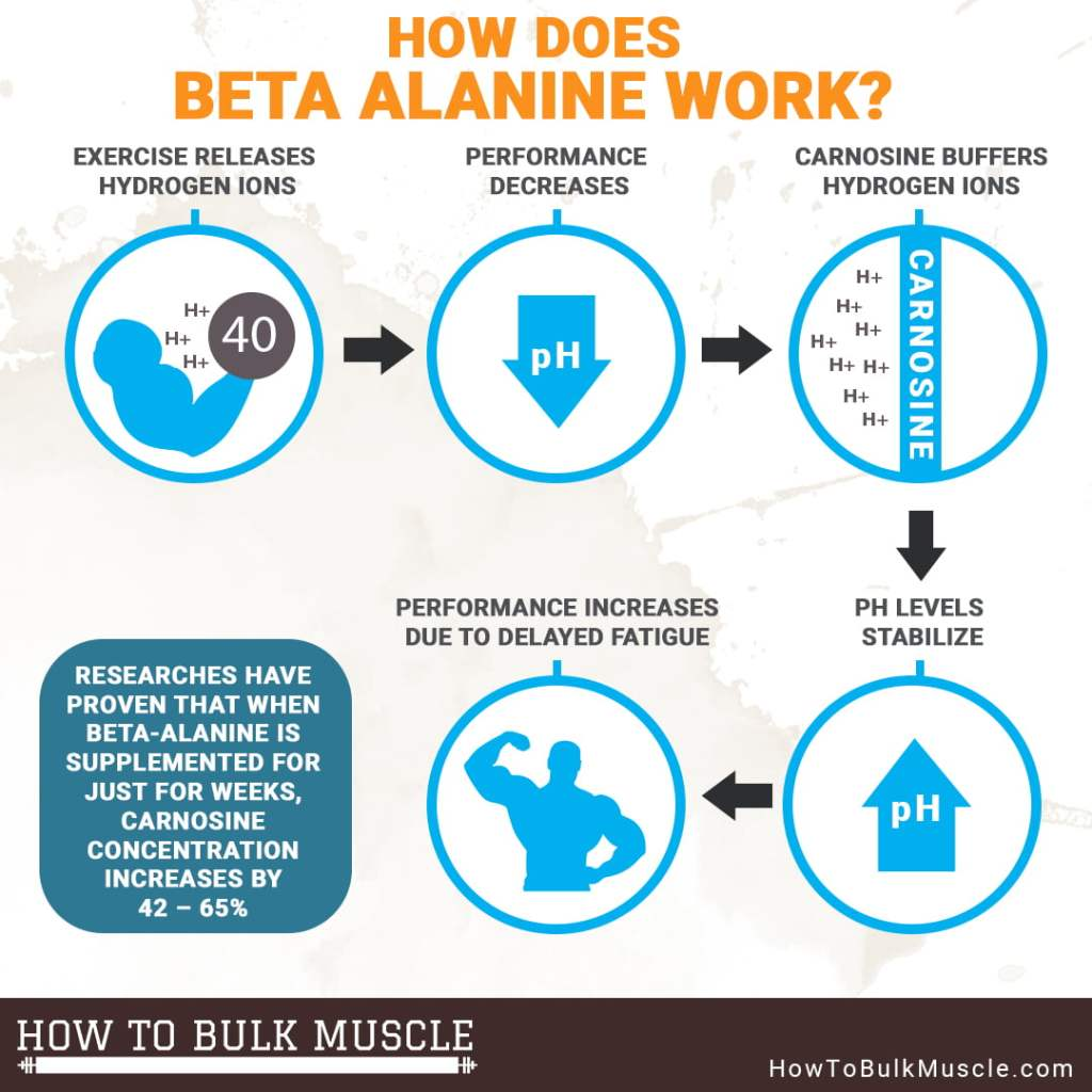 Beta Alanine Process