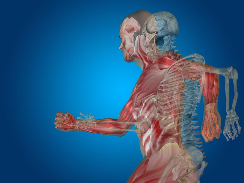Anatomical Running Body
