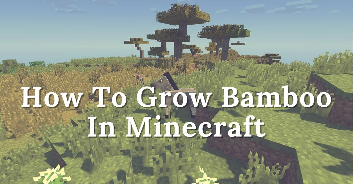 How To Grow Bamboo In Minecraft