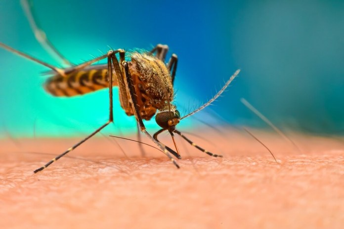 home remedies for malaria