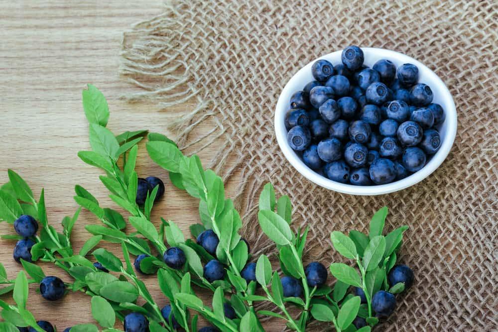 Bilberries and Leaves