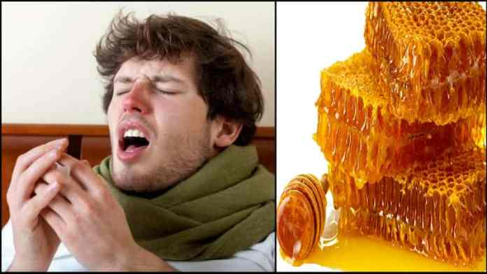 honey for treatment of cough and cold