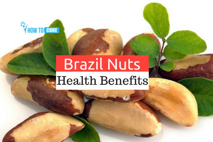 Brazil Nuts Benefits for Good Health
