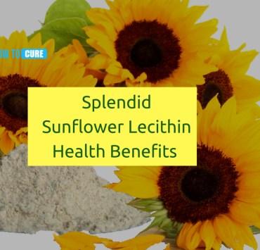 Sunflower Lecithin health benefits