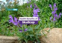 health benefits of skullcap