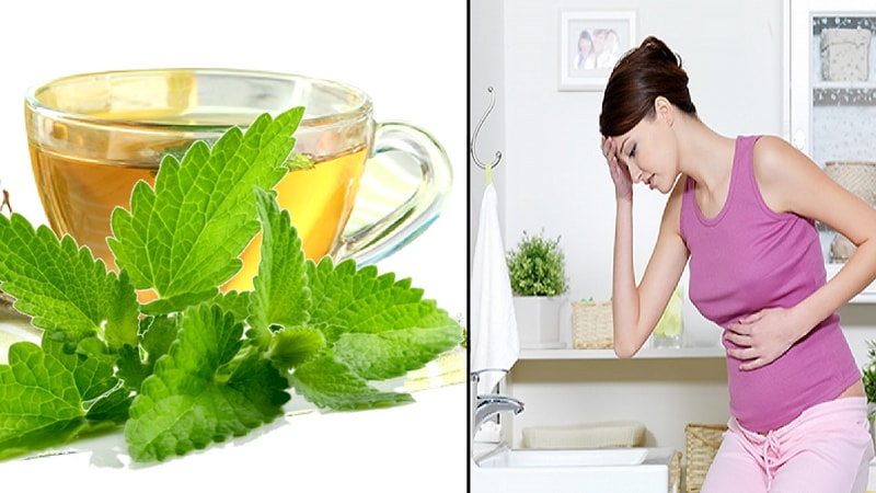 spearmint tea for morning sickness during pregnancy