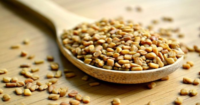 Fenugreek for bacterial infection