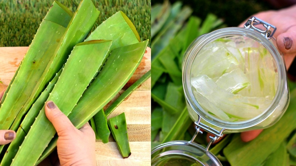 aloe vera gel to get rid of warts on face