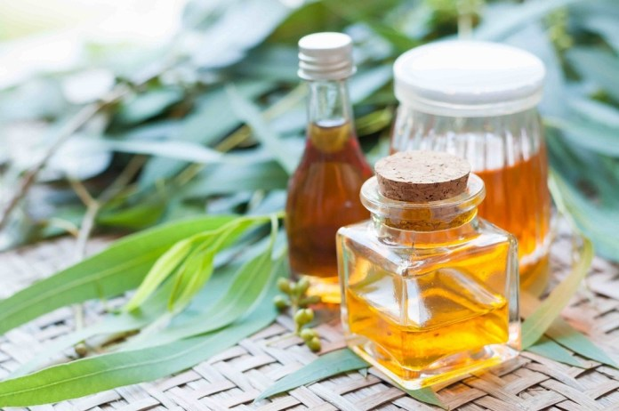 eucalyptus oil for cough