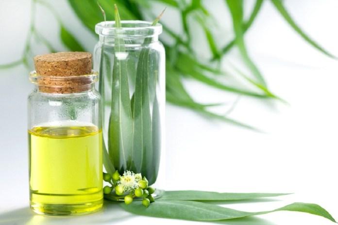 eucalyptus oil for sore muscles