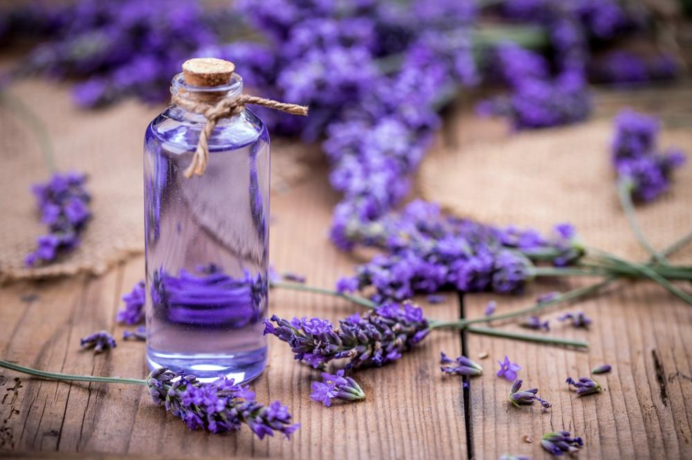 lavender oil for bronchitis problem