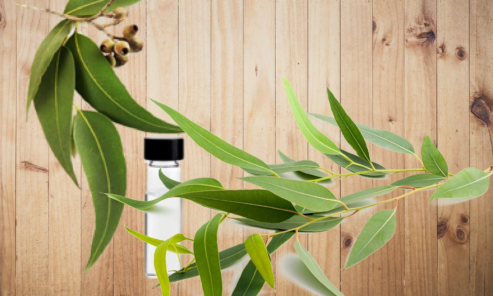 to cure back pain with eucalyptus essential oil