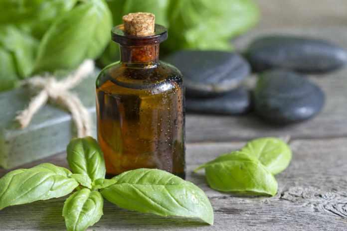 basil oil for mosquito bites