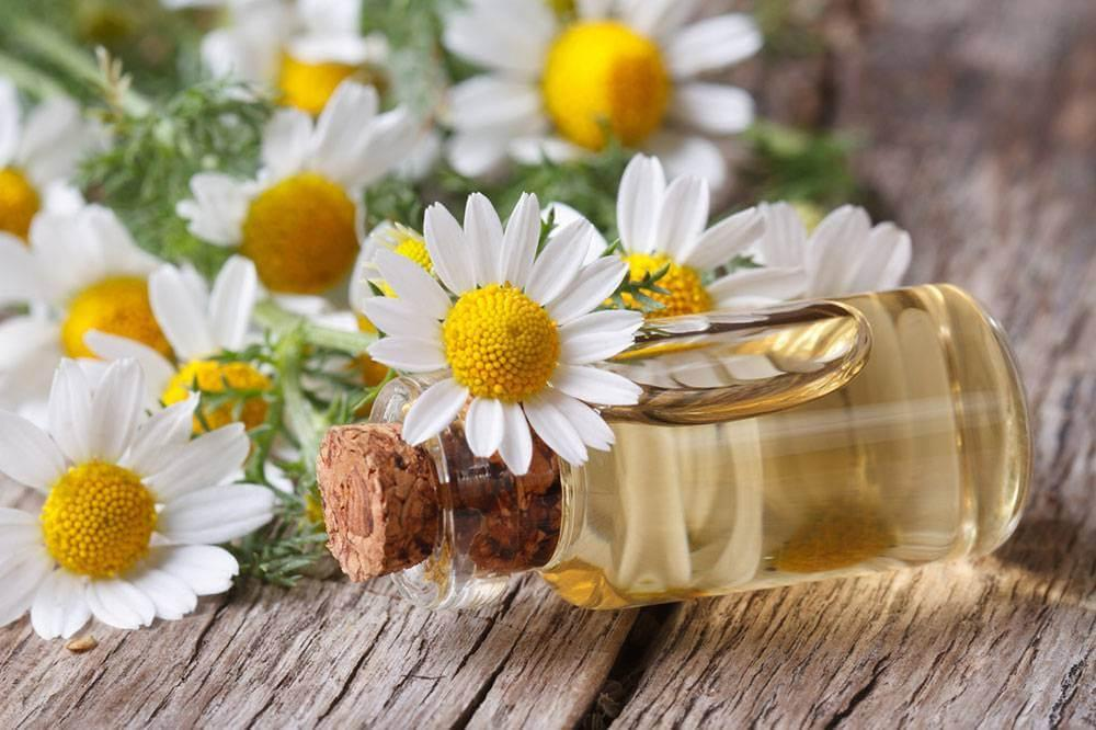 chamomile oil for nausea
