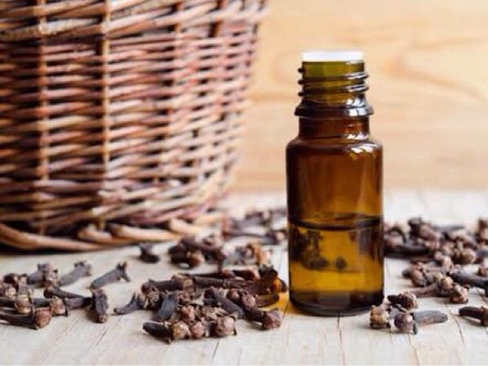 clove bud oil for stress