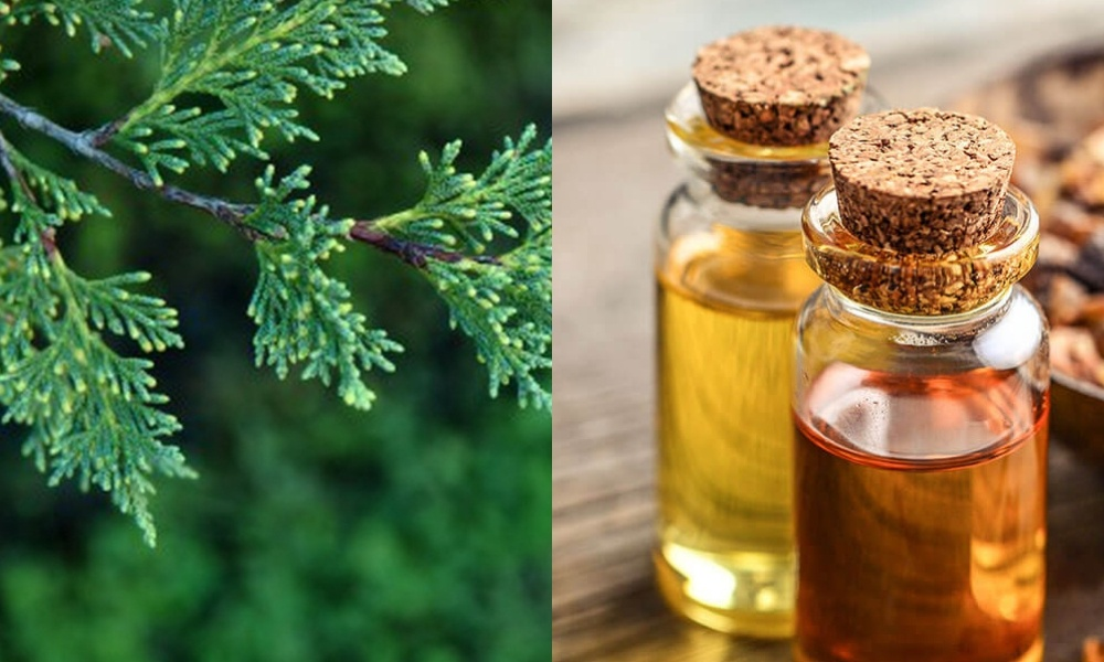 cypress oil for hemorrhoids