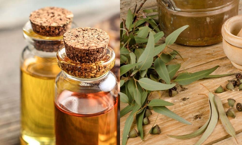 eucaliptos oil for strep throat