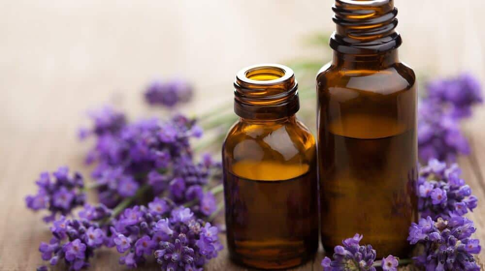 lavender oil for dandruff