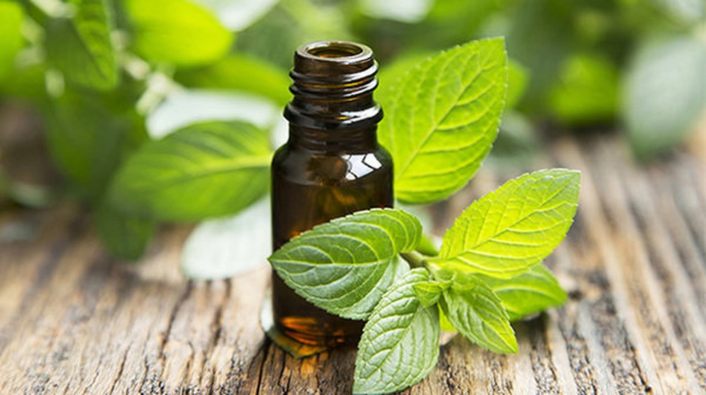 peppermint oil for teething
