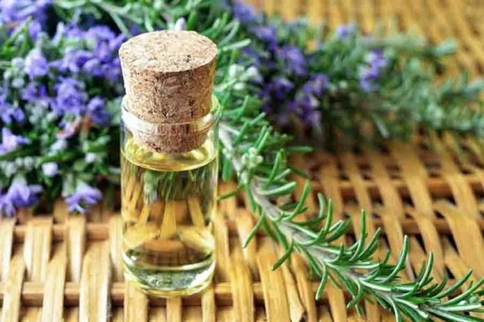 rosemary oil for asthma
