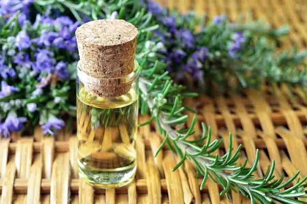 rosemary oil for asthma