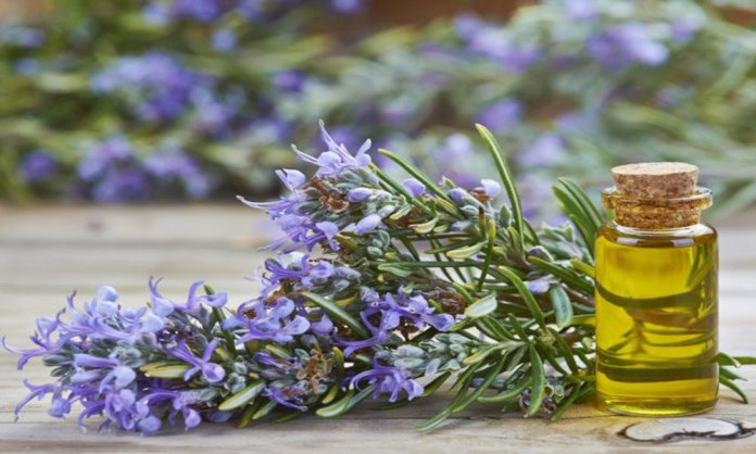 rosemary oil for thyroid