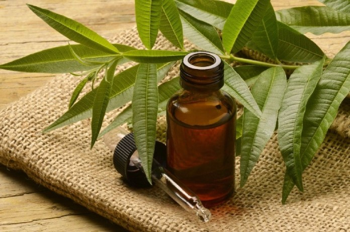 tea tree oil for a sinus infection