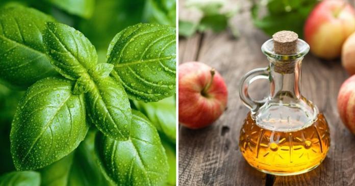 basil leaves and apple cider vinegar for warts