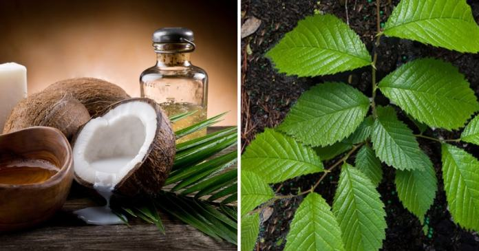 coconut oil with slippery elm for eczema
