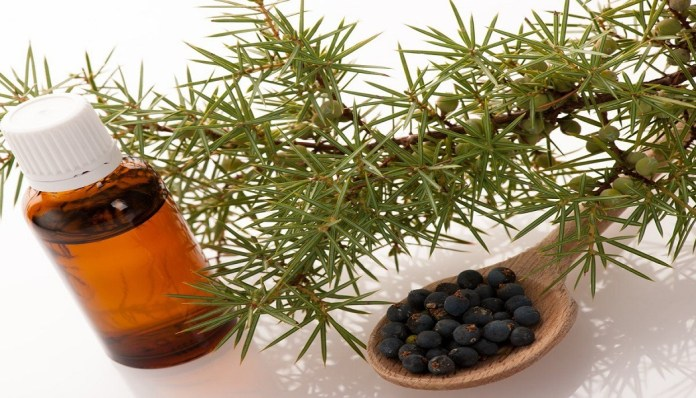 juniper berry essential oil for reduce cellulite
