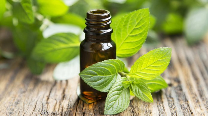lemon balm essential oil for adrenal fatigue