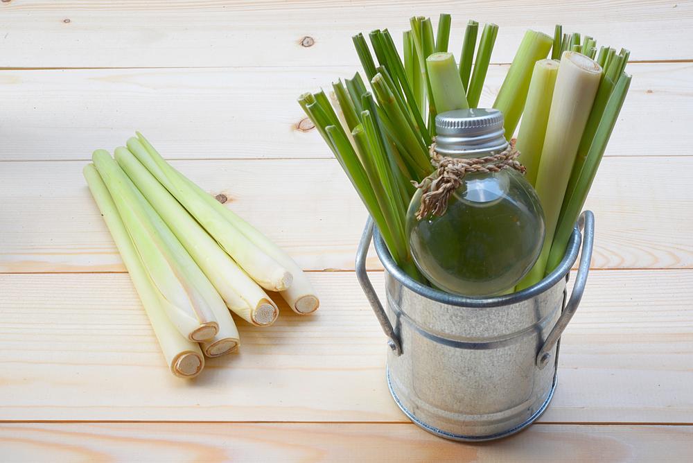 lemongrass oil for ringworm
