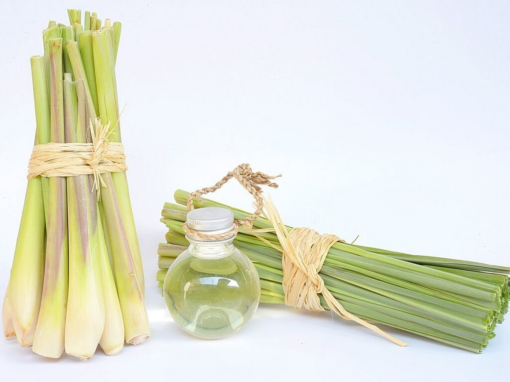 lemongrass oil for varicose veins