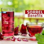 sorrel benefits