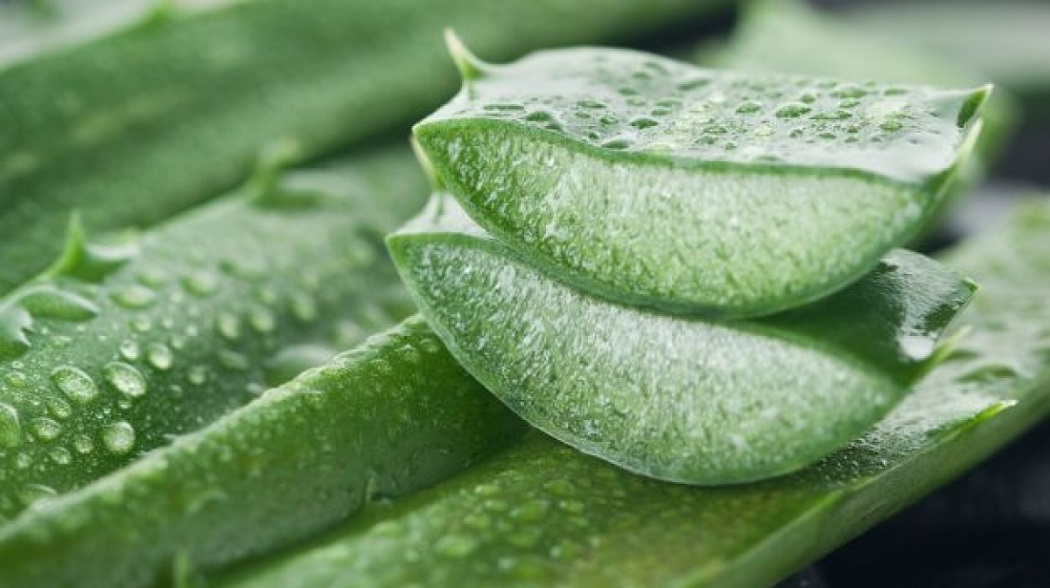 aloe vera for itching in private parts