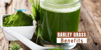 barley grass benefits