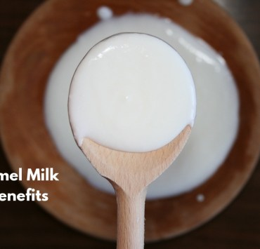 camel milk benefits