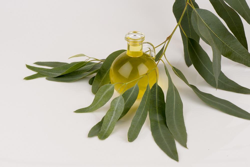 eucalyptus essential oil for immune system