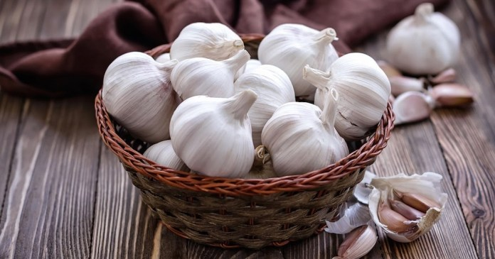 garlic for cure yeast infection