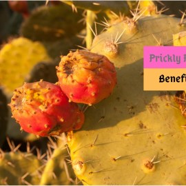 prickly pear benefits