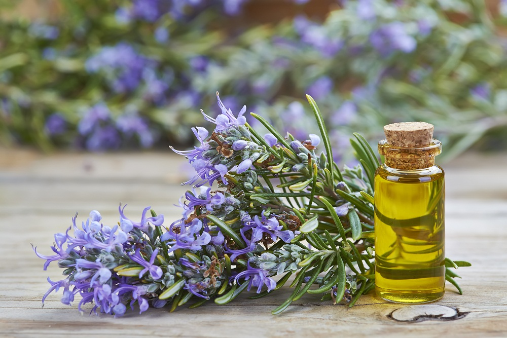 rosemary oil for hair