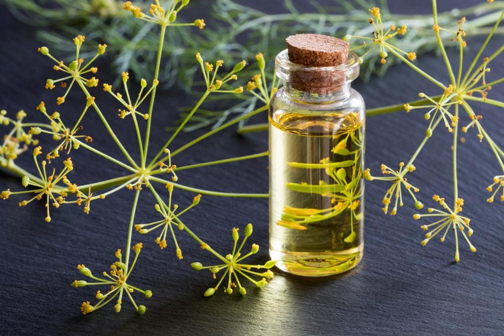 Dil seed oil-min