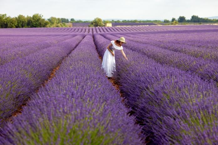 Lavender oil-min