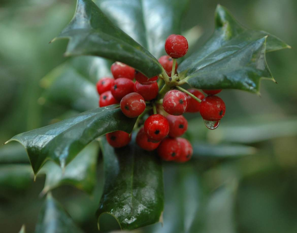wintergreen oil benefits
