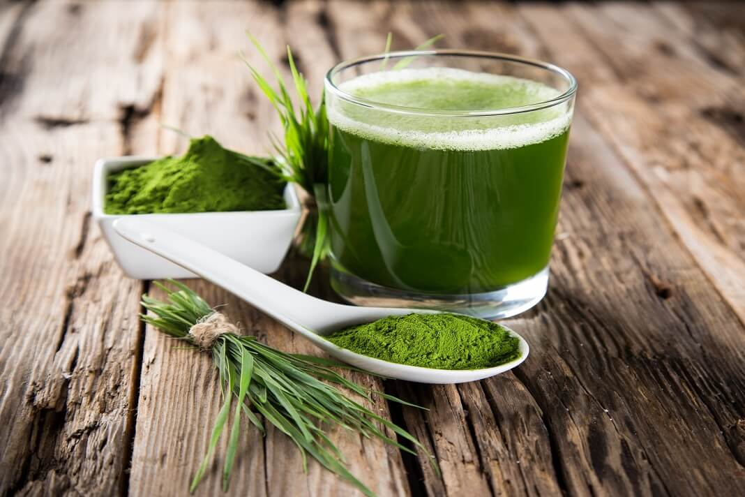 BARLEY GRASS JUICE powder benefits