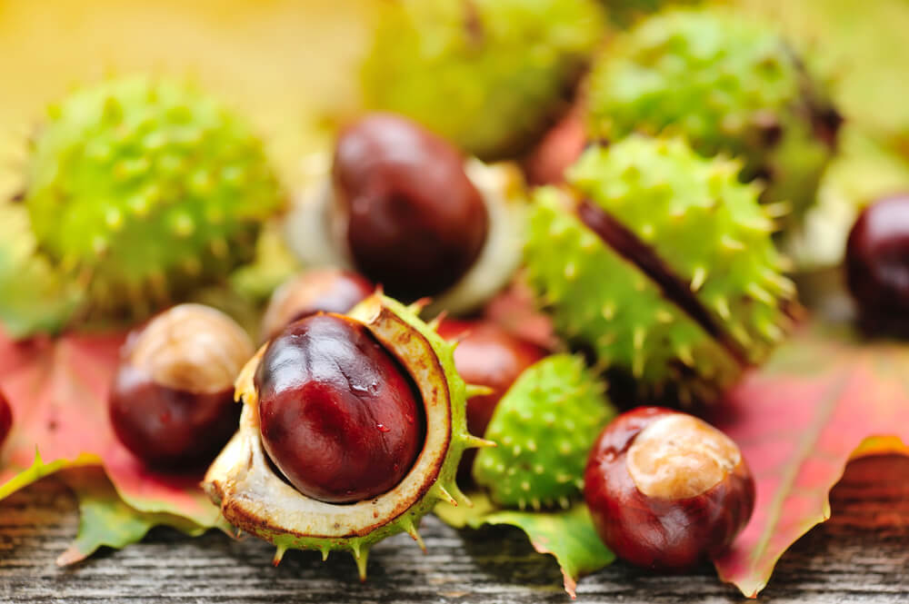 benefits of horse chestnut