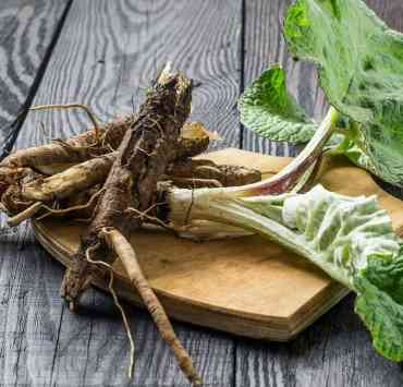 burdock benefits